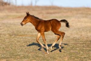 Epifisitis en caballos