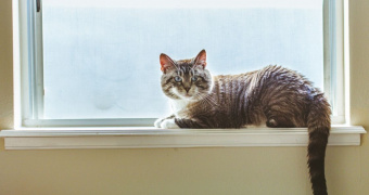 Degeneración Retiniana En Gatos