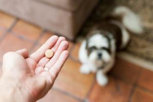 Diazepam para perros: usos, dosis y efectos secundarios.