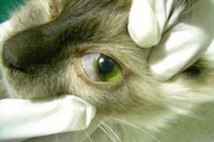 Párpado anormal en los gatos