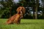 Sobrecrecimiento óseo en perros