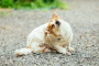 Cáncer de piel (linfoma epidermotrópico) en perros