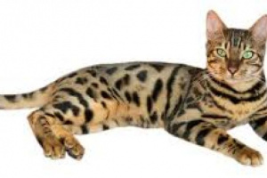 Muerte prematura en gatitos