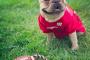 Perros seguros en el hogar: Apoyo para el comportamiento posterior a la adopción