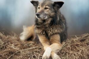 Infección fúngica (aspergilosis) en perros