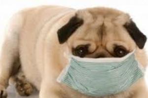 Depósitos de proteínas en el cuerpo en perros