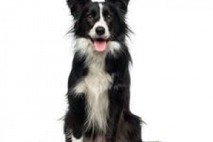 Agresión: cuando un perro está enfermo