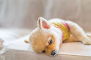 Hiperkalemia en perros: síntomas, causas y tratamientos.