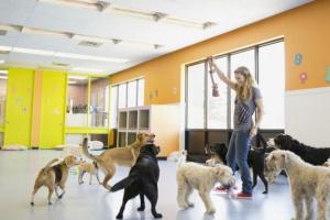 Adenovirus 1 en perros: síntomas, causas y tratamientos.