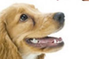 Cepillos de dientes de perro