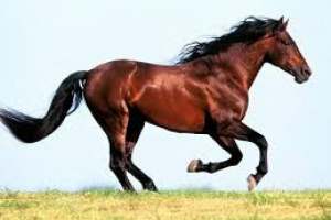 Trastorno de Temblor muscular en caballos