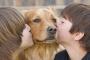 ¿Los animales tienen emociones?
