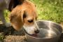 Taza para perros