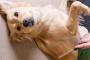Cabello aparente - Cómo mantenerse por delante de la caída del perroLogotipo de petMD