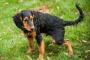 Estreñimiento del perro: por qué es una emergencia médica