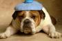 Ganglios Linfaticos Inflamados en perros