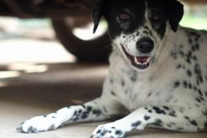 Envenenamiento por productos derivados del petróleo en perros