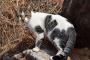 Cómo cuidar a un gato ciego