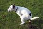 Digestión del perro: cuánto tiempo le toma a un perro digerir alimentos y otros conceptos básicos