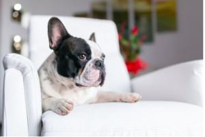 El peligro potencial para su perro ya está en su hogar