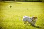 ¿Por qué algunos perros son más hiperactivos que otros?