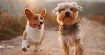 Dermatosis vesiculopustulares en perros