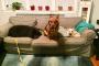 Consejos para la seguridad del perro durante las renovaciones del hogar