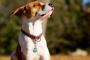 5 signos de insolación en perros
