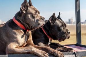 Cómo evitar que un perro macho marque en una casa