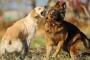 Agresión entre perros