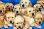 Cáncer carcinoide en perros