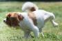 Infección renal en perros: síntomas, causas y tratamientos.