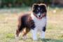 Cómo criar a un cachorro confiado