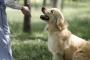 Encontrar un buen entrenador de perros