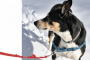 Disautonomia canina