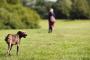 Cáncer de hueso en perros: síntomas, causas y tratamientos