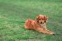 Deficiencias relacionadas con la sangre en perros