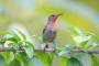Deficiencia de yodo en Aves