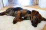 Ciproheptadina para perros: usos, dosis y efectos secundarios.
