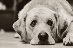 Mascotas mayores: ¡la vejez no es una enfermedad!