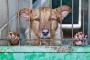 5 conceptos erróneos sobre perros de refugio