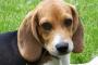 10 alimentos tóxicos que no deberías darle a tu perro