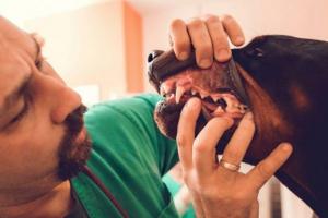 Estomatitis en perros: síntomas, causas y tratamientos.