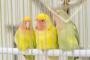 Poliomavirus en las aves
