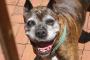 Glaucoma en perros