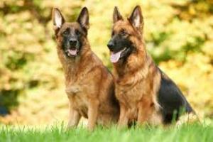 Colmenas en perros: causas, síntomas y opciones de tratamiento