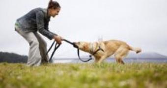 Razon y como hacer que tu cachorro deje de masticar