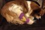 Un veterinario explica lo que debe saber sobre el seguro de mascotas para su perro