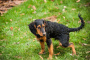 Black, Tarry Feces debido a la presencia de sangre en los perros
