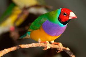 Infección de levadura gástrica en aves
